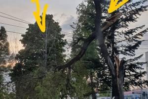 В Брянске на улице 3-го Интернационала гнилое дерево рухнуло на тротуар