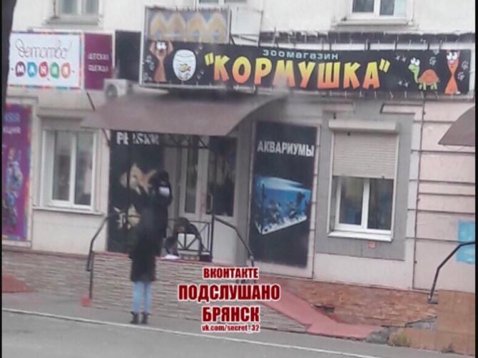 Соцсети: В Брянске на Пушкина ограбили зоомагазин