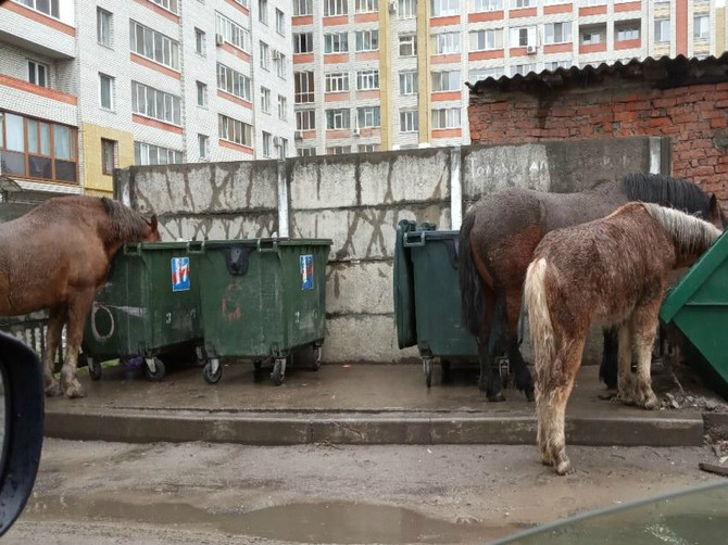 В Брянске на Володарке лошадь едва не убила пенсионерку