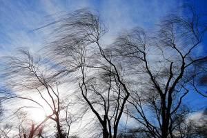 В последнее воскресенье сентября на Брянщину обрушится сильный ветер