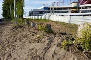 В Брянске спилили тополя возле строящегося Дворца единоборств