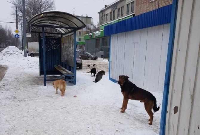 В Брянске на «Мечте» обосновалась свора бездомных псов
