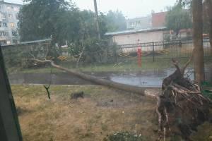 В Брянске возле детского сада на Орловской рухнуло дерево