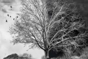 Брянцев пригласили на весеннюю выставку «Такое дерево»