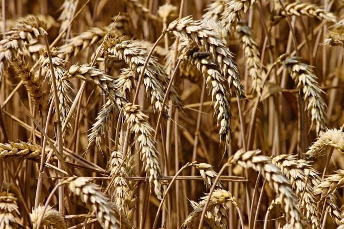 Брянщина отправила за границу около 225 тысяч тонн зерна