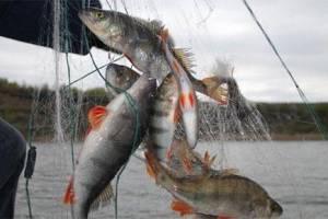 С жителя Суражского района приставы взыскали штраф за незаконную рыбалку