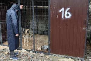 В Брянске 32 собаки из приюта нашли новых хозяев