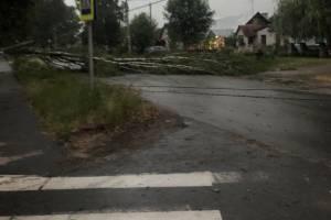 В Брянске ураган начал вырывать с корнями деревья