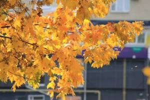 На Брянщине в понедельник потеплеет до +15ºC