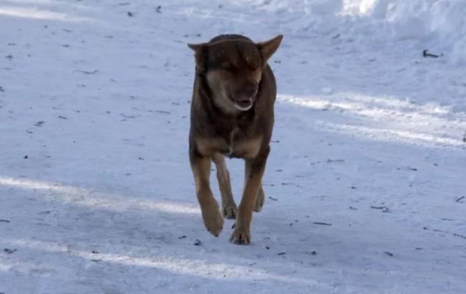 В Белых Берегах сбежавшая домашняя собака напала ребенка