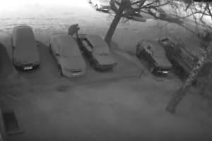 В Брянске сняли на видео ночную кражу бензина на стоянке