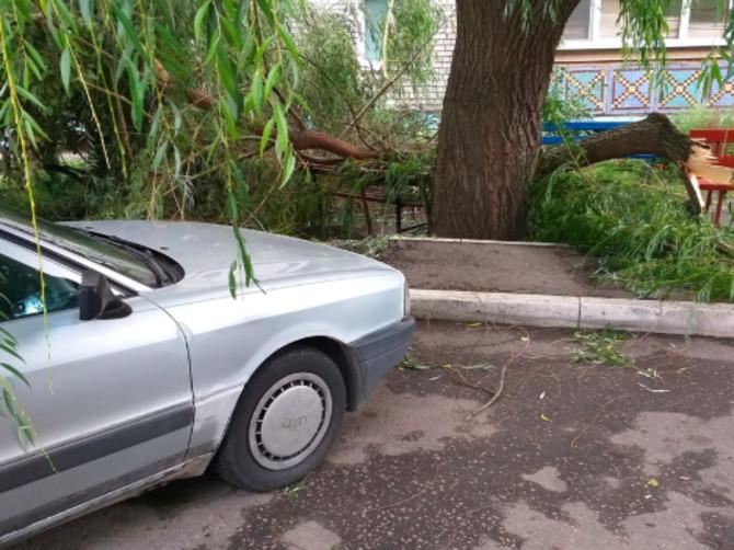 В Брянске на Костычева рухнула огромная ветка