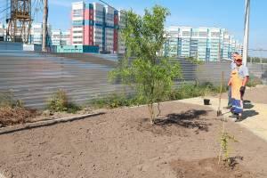 В Брянске на старом аэропорту заложили новый сквер