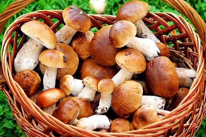 Брянцам рассказали об отравлении грибами