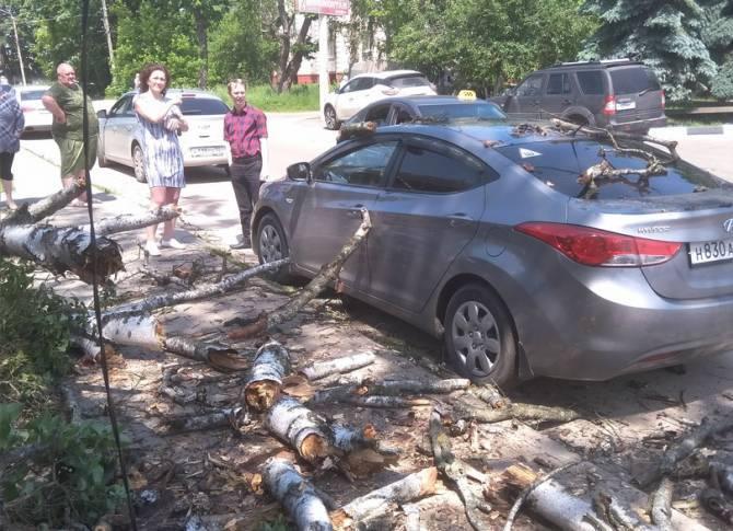В Клинцах из-за бездействия мэрии дерево упало на машину
