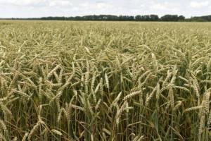Брянские аграрии за год произвели продукции почти на 92 млрд рублей