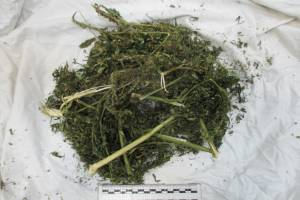 Брянский наркоман провёз через границу 200 грамм маковой соломы