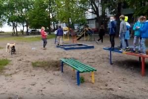 В Брянске собачницы загнали детей на теннисный стол