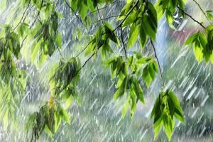 В Брянскую область придёт дождь с грозой