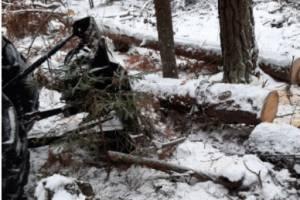 В Климово черный лесоруб лишился денег и бензопилы