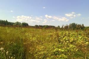 В Брянской области у недобросовестных землепользователей отобрали пять участков