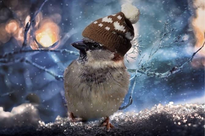 В Брянске 15 ноября ожидается мокрый снег и -5 градусов