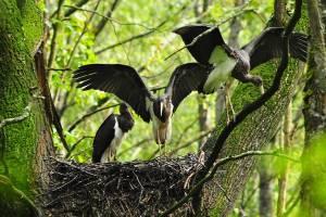 В Брянской области насчитали 165 видов птиц