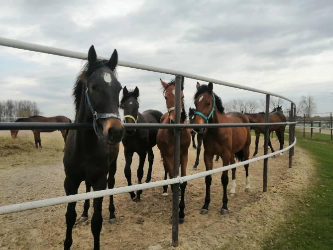 Брянцев пригласили покататься на лошадях и посетить царские конюшни