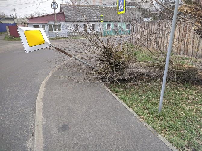 В Брянске дерево рухнуло на дорожный знак на улице Володарского
