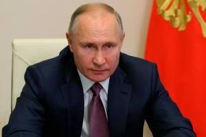 Путину расскажут о незаконной вырубке леса в Клинцах