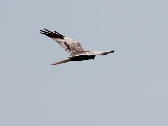 В «Брянском лесу» пополнился видовой список птиц