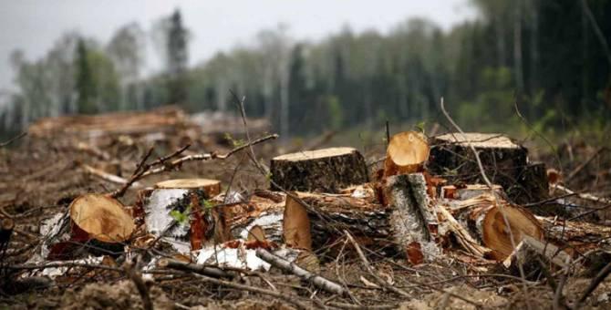На Брянщине за год незаконно вырубили лес на 7,5 млн рублей