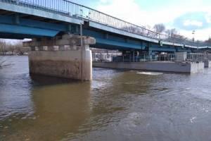 В Брянске из-за строительства моста на набережной спилили деревья