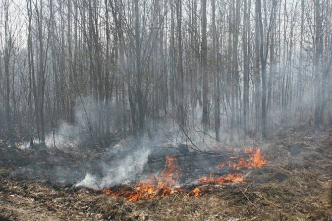 В Трубчевском районе произошёл лесной пожар