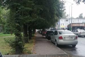 В Брянске кроны деревьев не дают людям пройти по тротуару
