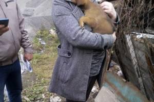 В Брянске собачницам не удалось спасти раненого щенка
