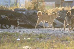 В Брянске бойцовские псы напали на стаю бездомных собак