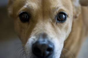 В Брянске догхантеры отравили собак на старом аэропорту