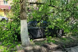 В брянском парке Толстого распилили упавшее на машину дерево