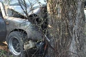 На брянской трассе 39-летняя автоледи протаранила дерево