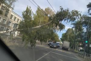 В Брянске возле школы №32 на дорогу рухнула огромная береза