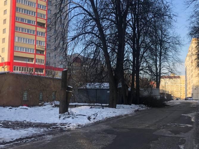 В Брянске варварски обкромсали деревья на улице Евдокимова