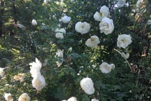 Жители Брянска радуются фотографиям Ботанического сада