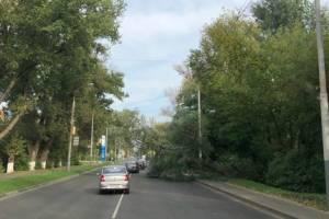 В Брянске дорогу на Володарку перегородило упавшее дерево