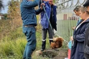 В Клинцах спасли провалившуюся в канализационный колодец собаку