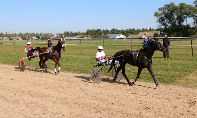 Брянцев позвали на большой конно-спортивный праздник в Локоть