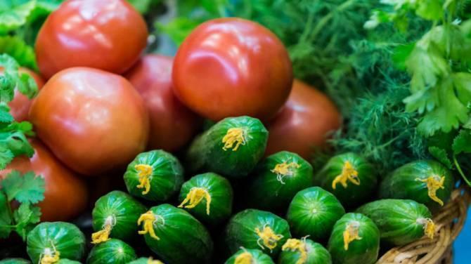 На Брянщине продажи овощей выросли в 1,4 раза