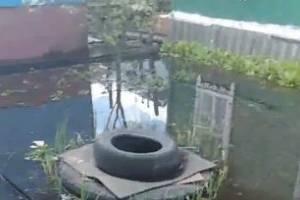 После ливня во дворе частного дома в Брянске случилось наводнение