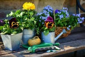 В Брянской области отмечен сезонный всплеск цен на товары для садоводов