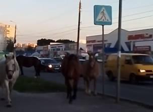 В Брянске лошади выжили с тротуара людей